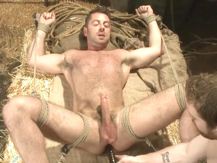 Hairy Stud Edged